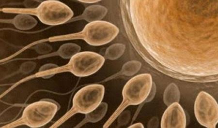 spermatozoidi-na-putu-ka-jajnoj-celilji-450